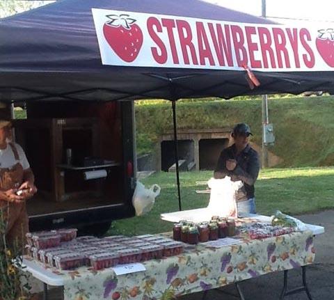 Strawberries Make Their Debut at the Jasper Farmers Market