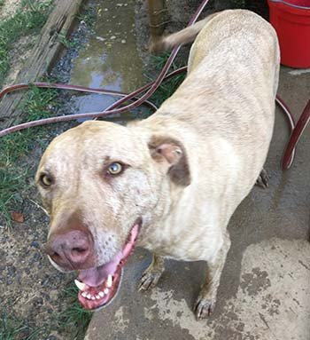 Pokey Needs a Home with Room to Run