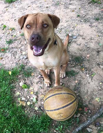 Ruxin Loves to Play Basketball