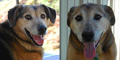 Senior Dogs, Sophie and Sackett, Looking For A Retirement Home