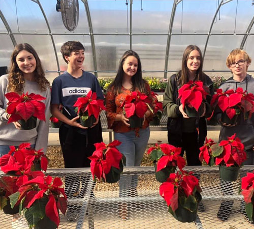 Buy Poinsettias for Christmas This Thursday & Friday