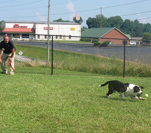 BOC Prioritizes Improvements at Pickens Animal Shelter