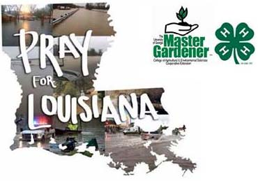 Pickens 4-H and Master Gardeners Collecting Donations For Louisiana Flood Victims