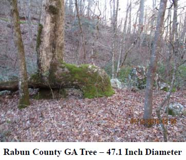 Trail Tree Newsletter - April 2016