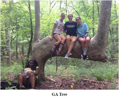 Tree Trail Newsletter April 2018